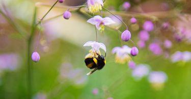 close up photography of honeybee 736848