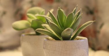 succulent plant 1169859 1920