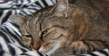 cat 4476167 1920